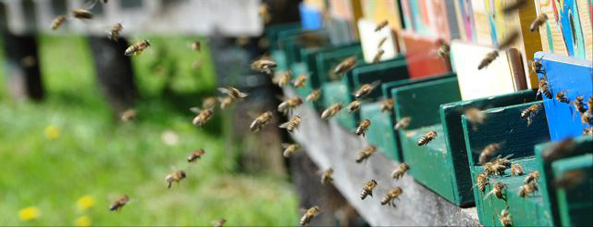 Bienenwelt Bründl