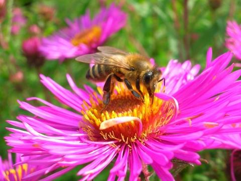 Großes Fest zu Ehren der fleißigen Bienen